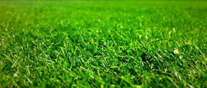 lawn care service keeps grass green and healthy